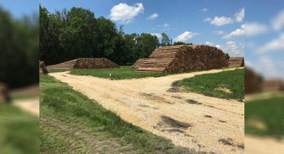 Neue Förderung der Landesregierung für Waldbesitzer
