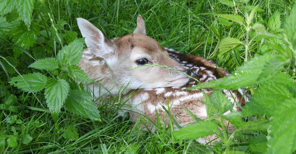 Bambi am Affenberg: Der Damwild-Nachwuchs sorgt für Disney-Feeling im beliebten Tierpark