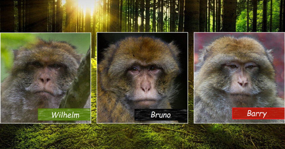 Das Triell am Affenberg: Wahlkampf auch bei den Berberaffen in Salem