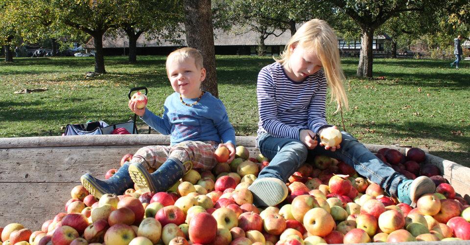 Oberschwäbisches Museumsdorf Kürnbach: Aktionen rund um die Apfelausstellung