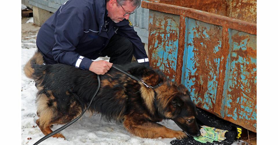 Pilotprojekt: Polizeipräsidium Einsatz bildet Banknotenspürhunde aus