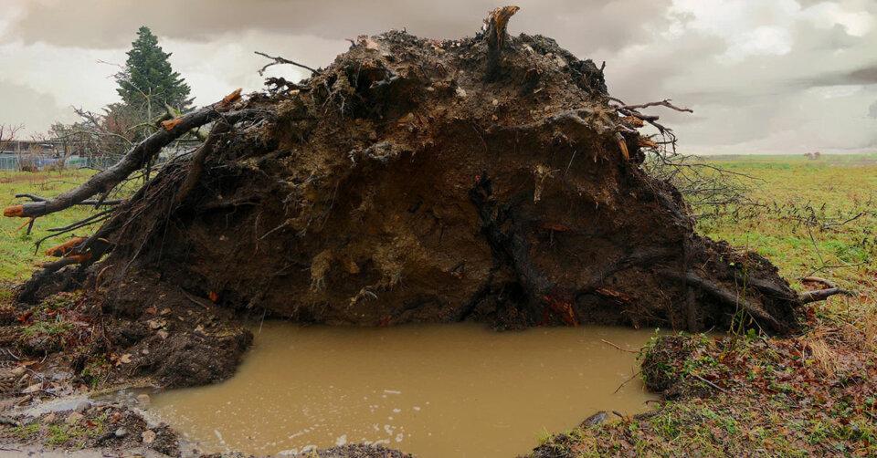 Entwurzelter Baum löste Stromausfall aus