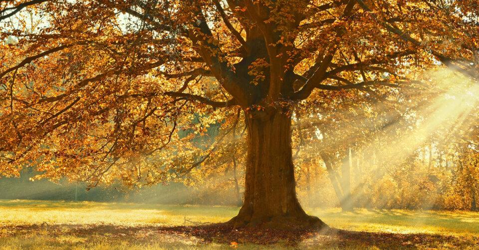 In einem Baumkataster registriert: Aktuell umfasst der Bestand 3384 Bäume