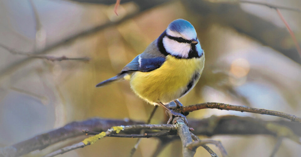 """""""Stunde der Gartenvögel"""" am zweiten Mai-Wochenende"""