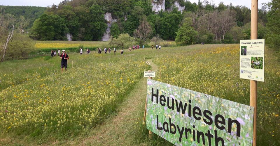 Blumenwiesen hautnah erleben: Heuwiesen-Labyrinth in Dietfurt noch wenige Tage begehbar