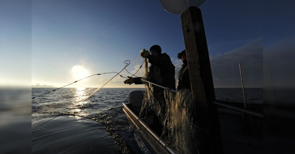 Bodensee: Pläne für Fischzucht vorerst nicht weiterverfolgt