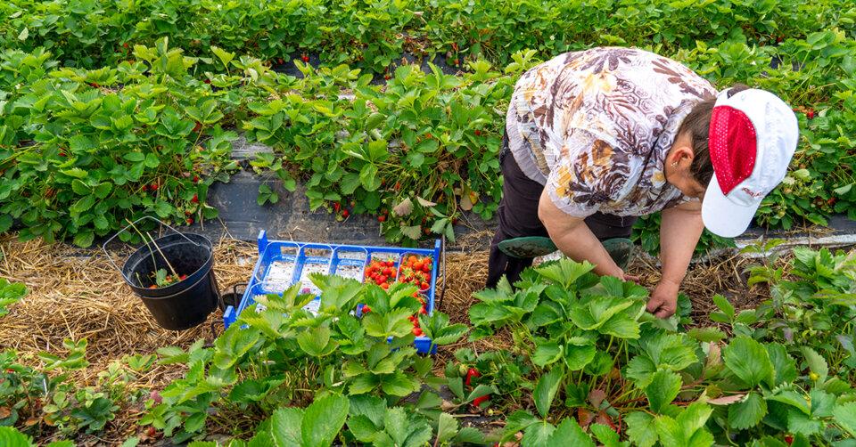 Erhebliche Mängel: Landwirt muss bis kommende Woche Unterbringung der Saisonkräfte verbessern