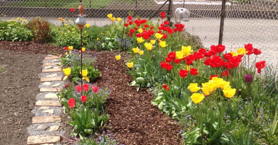 Freiwilligenagentur bringt Gartenbesitzer und Gartenfreunde in Kontakt
