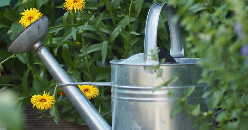 Die Pflanzen im Garten benötigen im Sommer besonders viel Aufmerksamkeit.