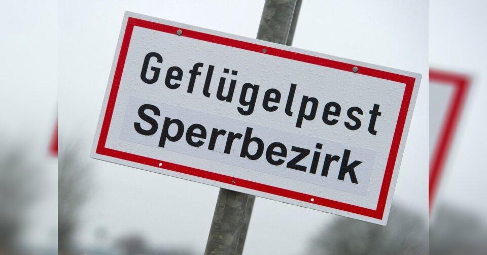 Geflügelpest: Bayern hebt landesweite Stallpflicht auf