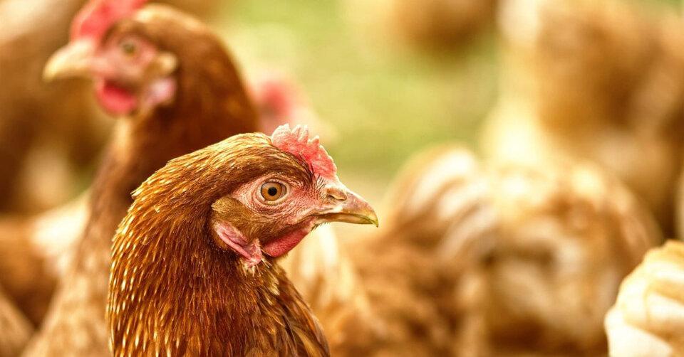 Allgemeinverfügung zum Schutz vor Geflügelpest erlassen