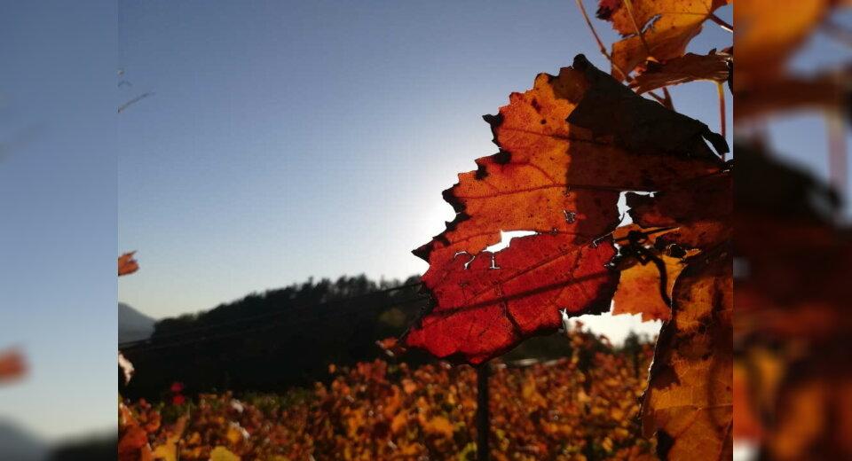 Herbstliche Aktionen und Fototouren im Biosphärengebiet