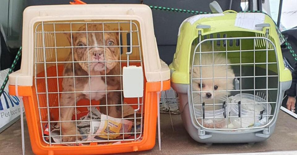 Illegaler Hundetransport: Bundespolizei befreit 14 Welpen aus misslicher Lage