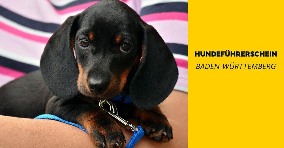 Hundeführerschein in Baden-Württemberg kommt