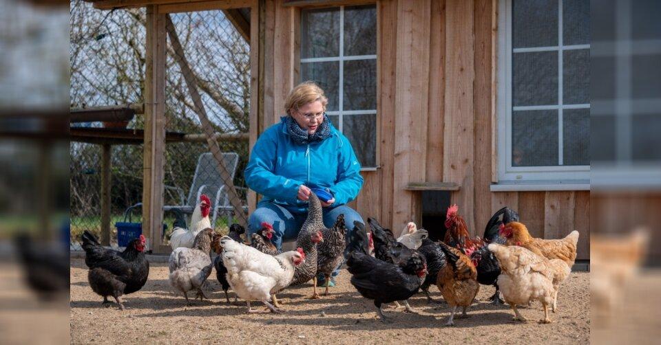 In Bleckhausen in der Eifel sind die Hühner los