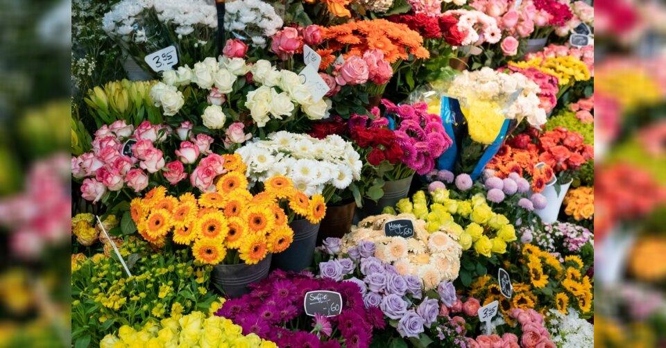 Justizminister für Öffnung von Blumenläden und Gartencentern
