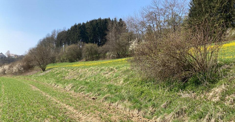 "Naturwettbewerb ""Immer am Rand, meistens verkannt!"" Landschaftserhaltungsverband rückt ökologisch wichtige Randflächen in den Blick"