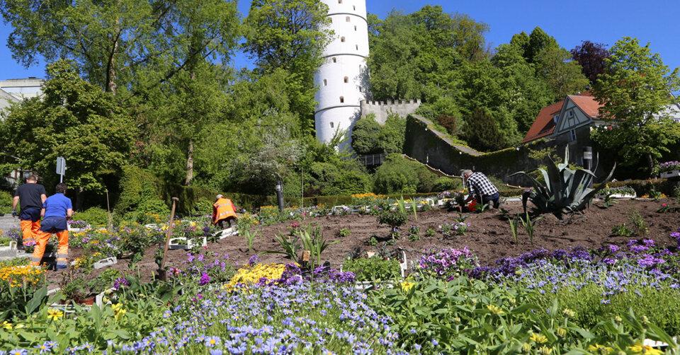 Neue Bepflanzung in der Innenstadt: Der Stadtgarten erstrahlt blau-gelb