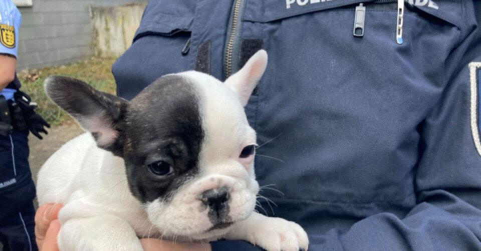 PETA deckt illegalen Welpenhandel in Stuttgart auf
