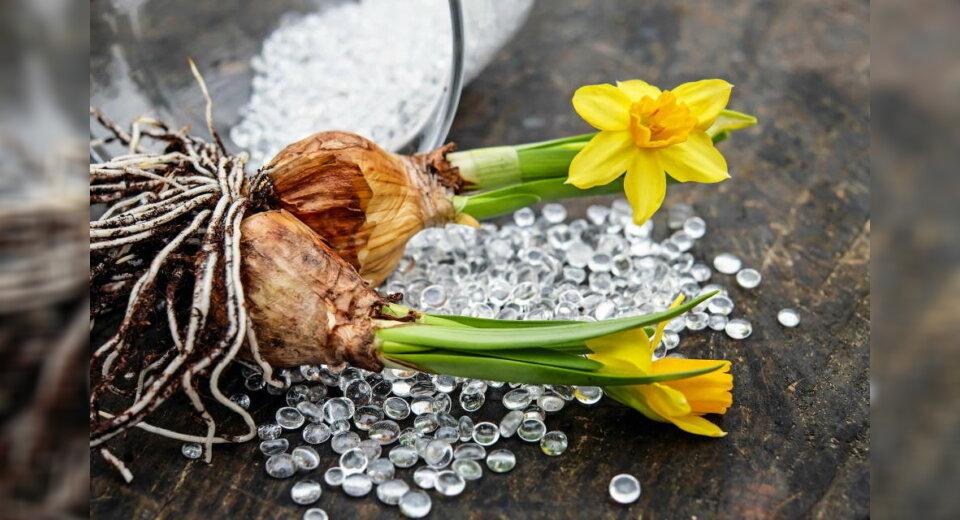 Burachhöhe: Blumenzwiebel- Pflanzaktion