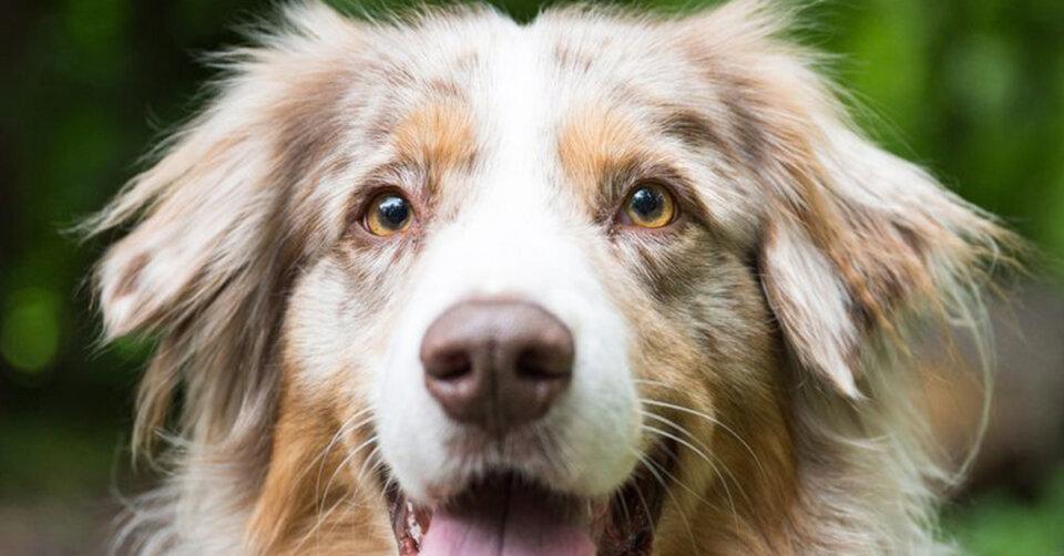 Rekordeinnahmen aus Hundesteuer im Corona-Jahr 2020