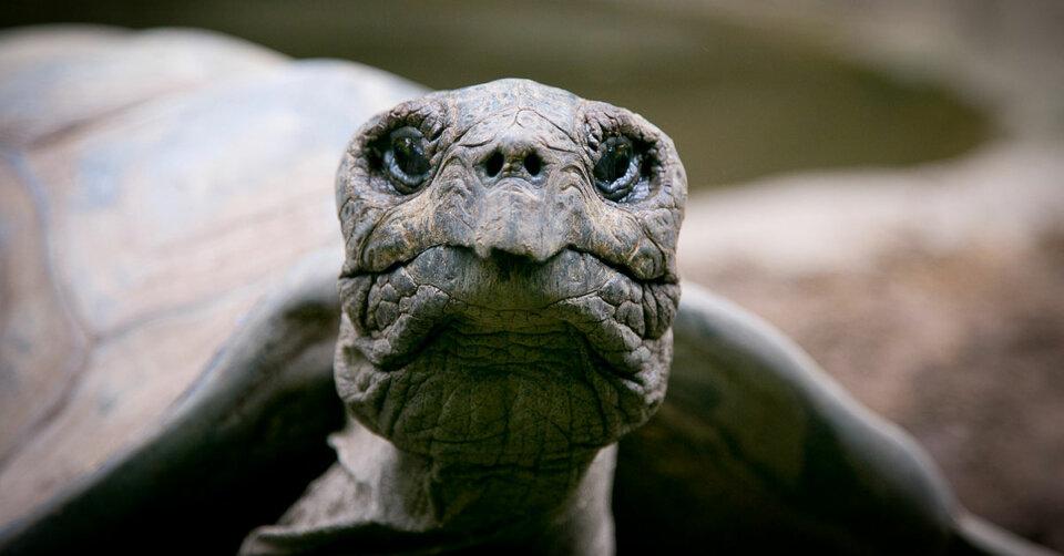 Hallo Fundamt, wurde bei Ihnen eine Schildkröte abgegeben?