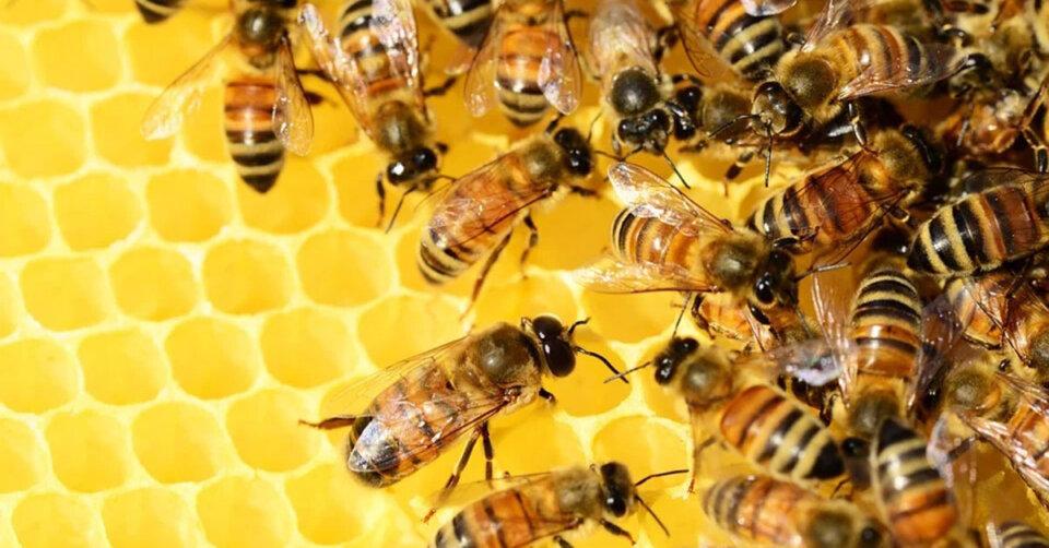 Schlechteste Honigernte seit fünf Jahren