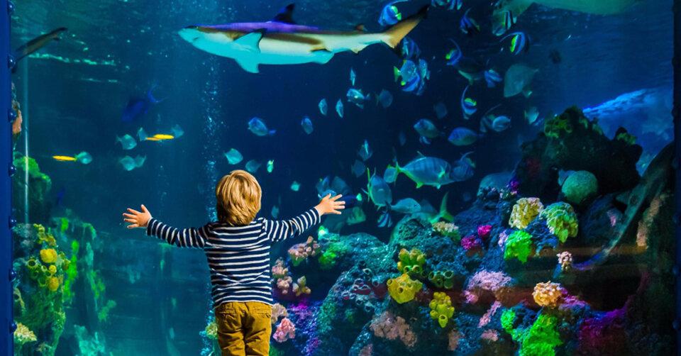 Entdecken und erleben: Das SEA LIFE hat wieder auf