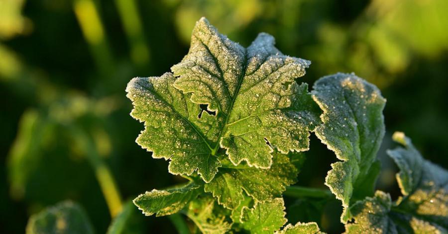 Bis zum Wochenende besteht nachts örtlich Bodenfrostgefahr.
