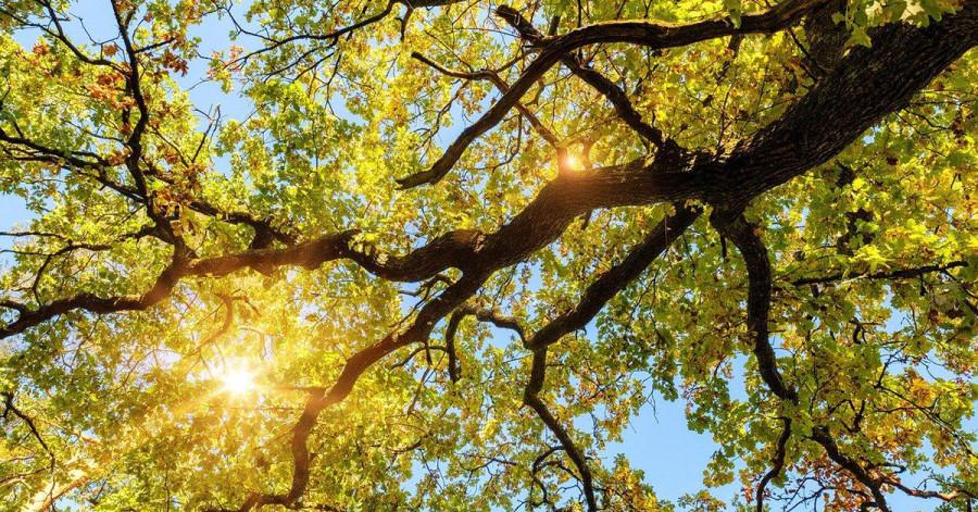 Reichlich Sonnenschein erwartet uns am Donnerstag und Freitag.