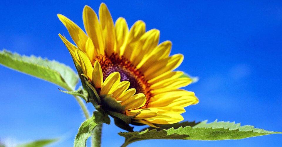 Viel Sonnenschein, Sommerhitze, Schwüle und Saharastaub: Unwettergefahr am Wochenende!