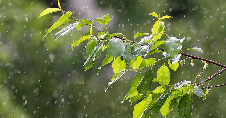 Sonnige und trockene Wetterphase endet: (viel) Regen – ein wahrhafter Segen für die Natur!