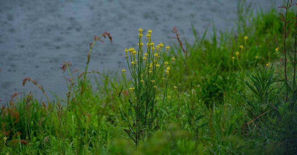Wechselhafte Regenphase bis zum Wochenende: Sonniges Sommerwetter naht!