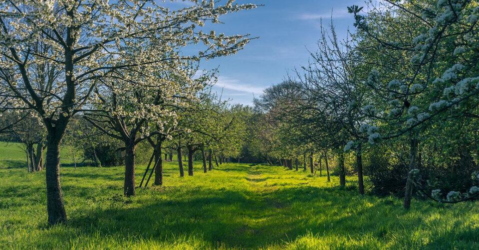 Der Frühling macht weiter mit klassischem Aprilwetter & über 15 Grad: Die Natur erwacht!