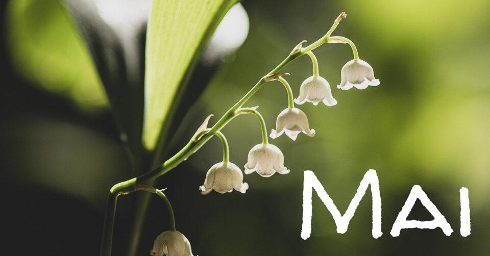 Wonnemonat Mai – Dichter, Sänger und Liedermacher haben ihn besungen