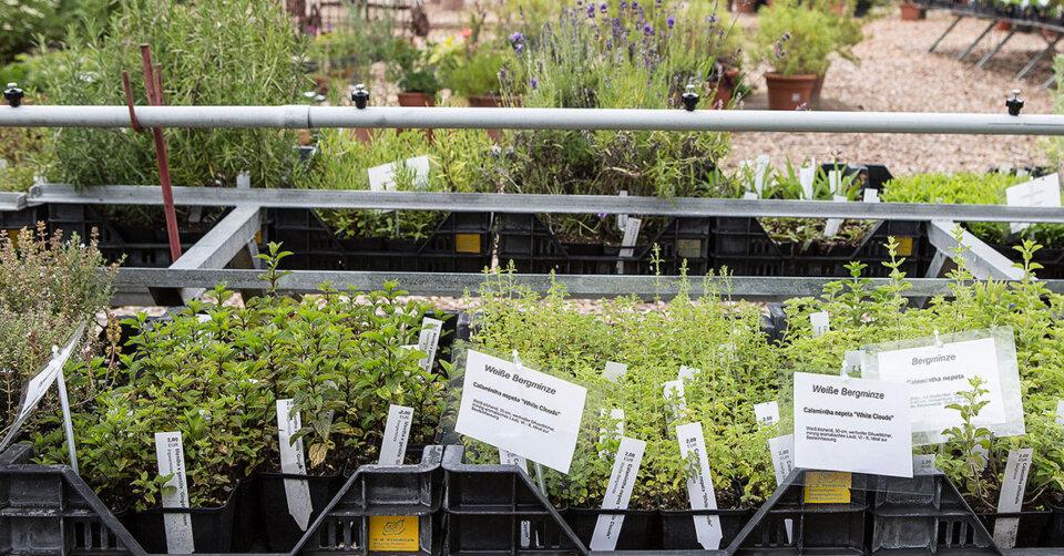 Bunte Vielfalt für die Gartensaison